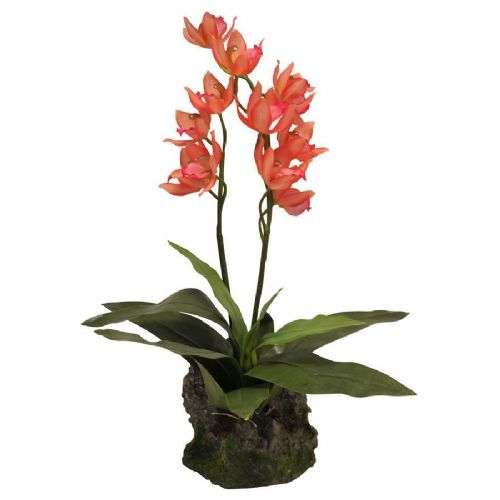 LR Upright Orchid Red 35cm, IF-15